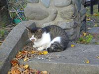 散歩のニャンと宮部みゆき10月28日(水) - しんちゃんの七輪陶芸、12年の日常