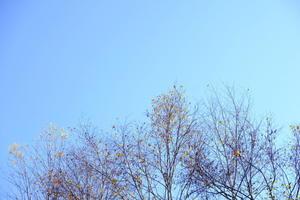 日々のコトの葉だより vol.17 〜スタッフの早着替え術〜 - 北軽井沢スウィートグラス
