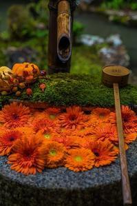 ハロウィンの花手水~柳谷観音 - 鏡花水月