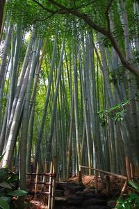 鎌倉報国寺①竹の寺 - 暮らしを紡ぐ2