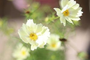 今年の球根 - my small garden~sugar plum~