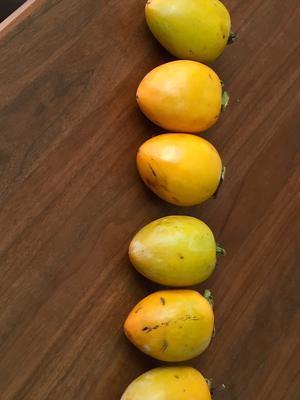 ネギ味噌おにぎり   と    干し柿 作り -