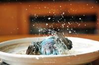 水浴びB.Bの記録(続・10月24日) - FUNKY'S BLUE SKY