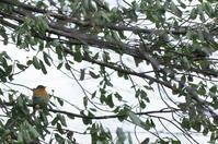 戸隠森林植物園 2020.10.26 - 鳥撮り遊び