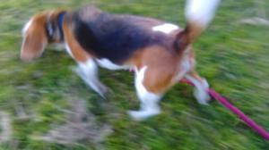 ずぼらトリーツ(トレーニング用オヤツ)の作り方 - 子豚たちの反乱 2  ~保護犬たちの幸せさがし~