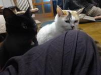 高齢夫婦と猫の朝の体操 - ゆうゆう覚書