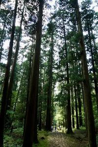 平泉寺白山神社ー2 - いつもの空の下で・・・・