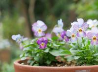 小さい花の庭 - 勉強、畑、ときどき野球
