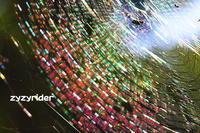 色彩ゆたかなクモの巣 - ジージーライダーの自然彩彩