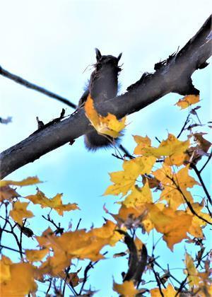 秋の森からエゾリス便り - エゾリスと森の仲間たち