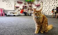 ハバロフスクに猫カフェがオープン!~◆JICハバロフスク便り◆~ - ■ JIC トピックス ■  ~ ロシア・旧ソ連の情報あれこれ ~
