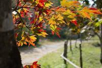 色づき始め - yoshiのGR散歩
