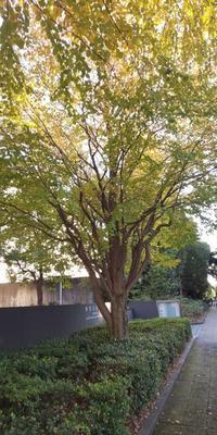 10月30日  「香りの記念日」・錦秋の茶会(最後に) - 煎茶道方円流~東京東支部~