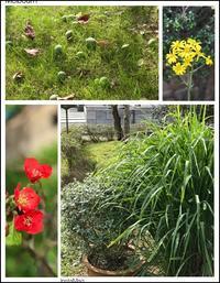 寂しい庭 - ひとりあそび