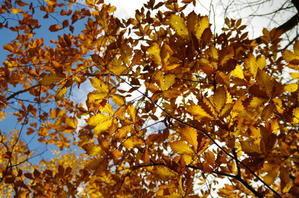 *秋のフィナーレⅡ* -