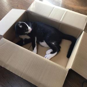 SIXPAD トレーニング54日目猫ベッド - shinoのまったりな日々