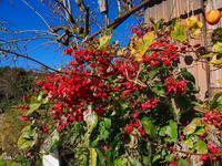 晩秋の蝶Ⅱ - 飛騨山脈の自然