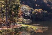 糸魚川市お昼時の蓮華白池の紅葉中編 - 日本あちこち撮り歩記