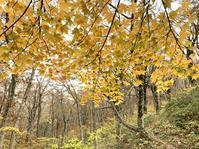 10月29日(木)まだまだ紅葉 - 庄原市上野公園(上野池)とその周辺の出来事