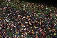 図書館の秋を散歩する - Yoshi-A の写真の楽しみ