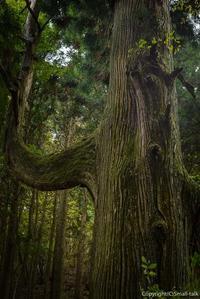 森の特等席 - ひつじ雲日記