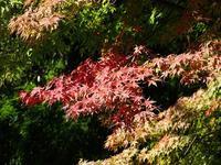 アザミやノギクに集まるチョウたち - Magnolia Lane 2