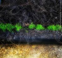 カラスノエンドウ - Illusion on the Borderline  II @へなちょこ魔術師