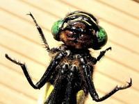 【令和2年度第2回霞ヶ浦の自然観察「センターの庭で昆虫を観察してみよう!」WEBページを公開しました!】 - ぴゅあちゃんの部屋