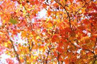 秋色の公園【2】 - 写真の記憶