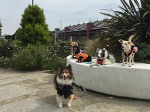 2020 October - seaside-mono-dogs
