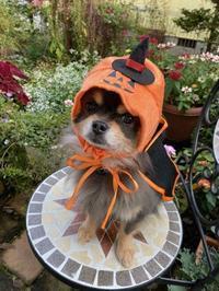 Happy Halloween&星影のエール - グリママの花日記