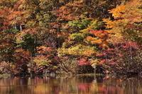 糸魚川市お昼時の蓮華白池の紅葉後編 - 日本あちこち撮り歩記