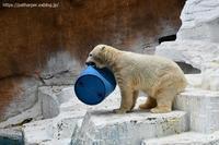 2020年9月天王寺動物園その3 - ハープの徒然草
