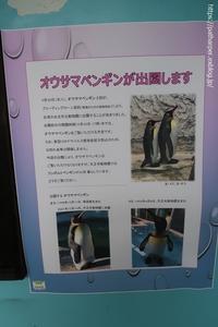 2020年9月天王寺動物園その4 - ハープの徒然草