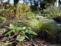 来年の春に向けて…宿根草の植えかえと苗の植えつけ2 - シンプルで心地いい暮らし