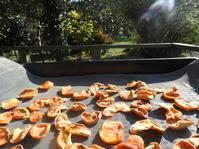 富有柿をドライフルーツにしてみました。 - 柴まみママの大多喜便り