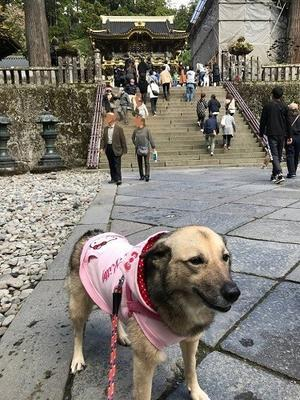 幸せ便り~10月 ⑨ - Together with the dog  ~ ファンパウズ