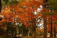 2012-11-09 - あるふぁ日記