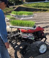 玉葱の苗植えを手伝う足腰ガタガタ - 島暮らしのケセラセラ