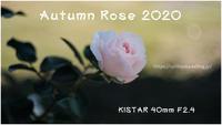 Autumn Rose 2020 #001 @KISTAR 40mm F2.4 - ルリビタキの気まぐれPATA*PATA