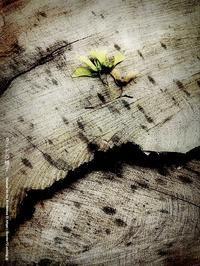 カエデの種子 - Illusion on the Borderline  II @へなちょこ魔術師