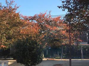 秋の深まり - ワットモーイ  オランダのフラワーアレンジメント教室
