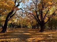 晩秋の円山公園 - プティタプティ