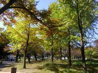 幸せな町の秋 #1 - 神奈川徒歩々旅