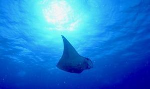 10月最終日 - 沖縄久米島 海大好き人間の独り言