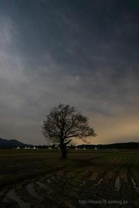 孤高の木 - デジタルで見ていた風景
