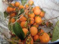 渋柿 - さかえのファミリー