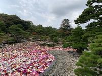 旅の続き〜大根島の牡丹とダリア - カフェスタイルの家づくり~Asako's WORK & LIFE