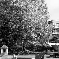 日曜日の木登りイベント - 照片画廊