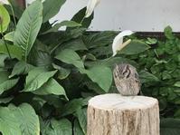 念願の!掛川花鳥園へ行ってきました! - 有縁千里来相会